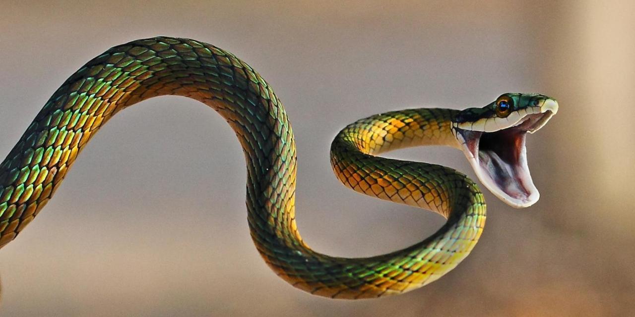 Kết quả hình ảnh cho con rắn